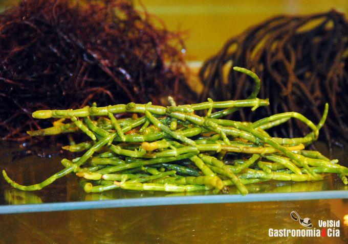 Suralgae