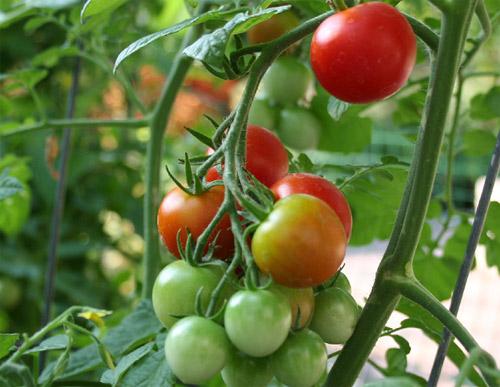 vegetales_rusia_pesticidas.jpg