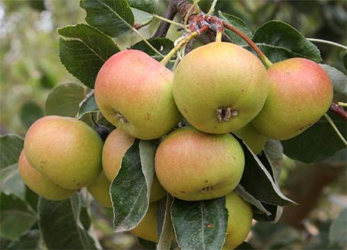 frutas_ecologicas_beneficio.jpg