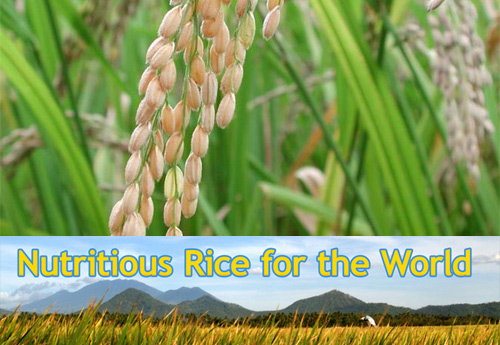 nutritious_rice.jpg