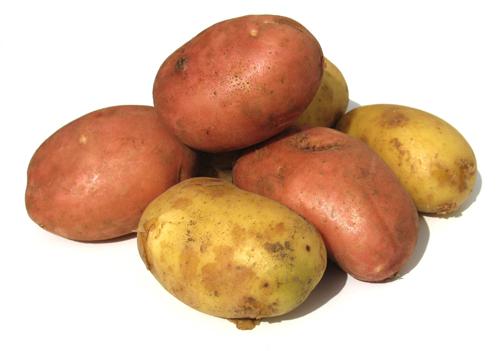patatas_amflora.jpg