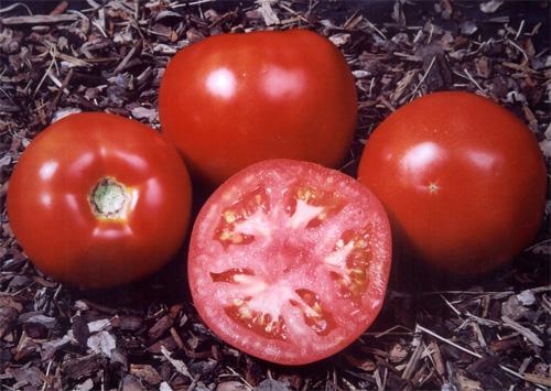 tomates_prevencion_cancer.jpg
