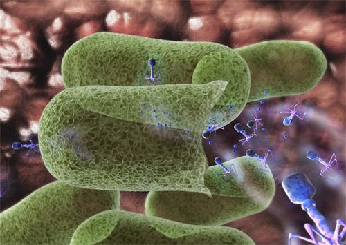 Bacteriofagos verduras