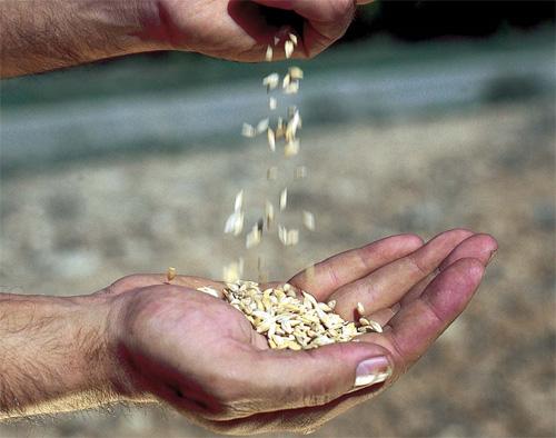 necesidades alimentarias mundiales