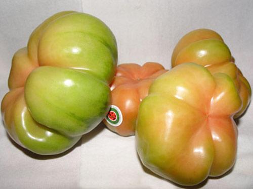Tomates de Catalunya