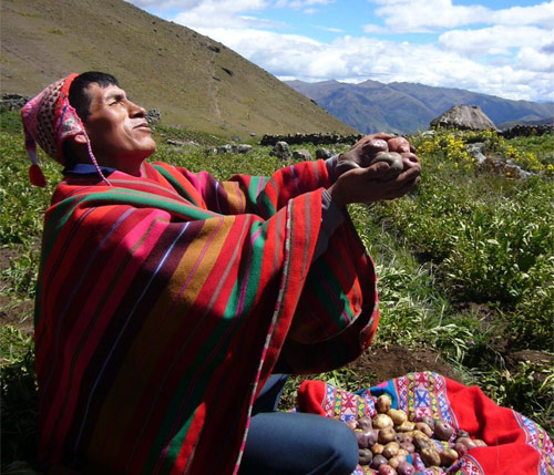 Pérou: le Parlement adopte un moratoire de 10 ans sur les OGM