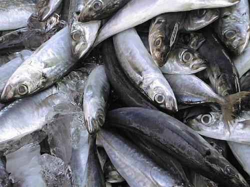 Pescado alimentación