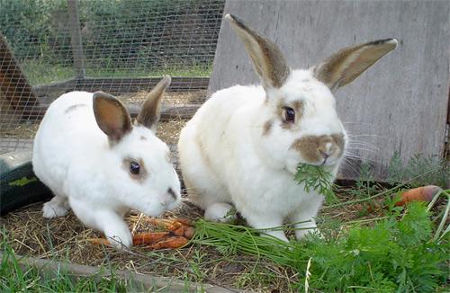Recetas de Navidad con carne de conejo