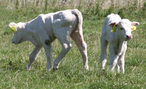 Clonación y alimentación