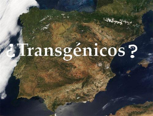 Cultivos OGM en España