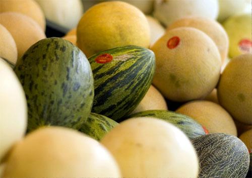 Mejora genética del melón