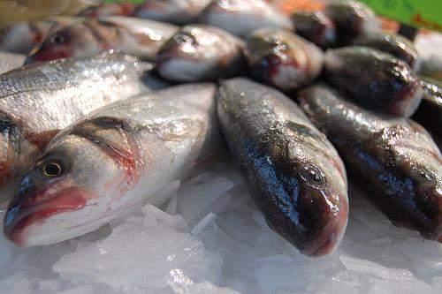 clases de pescados imagui