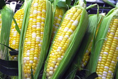 Monsanto y Dow Chemical