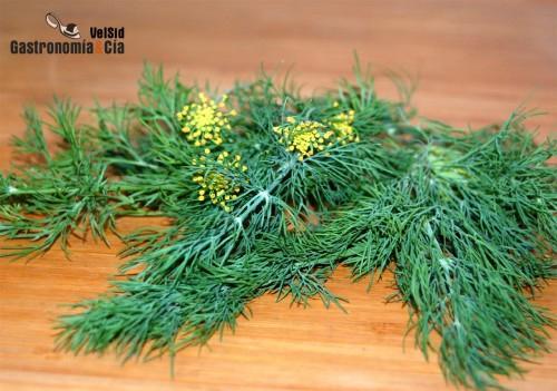 Anethum graveolens, hierba aromática