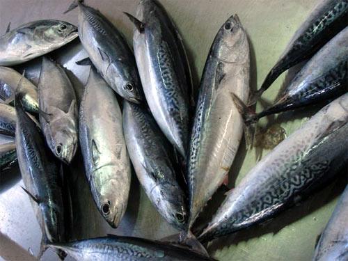 Pescado_azul