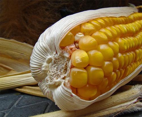 Consecuencias para la salud por los OGM