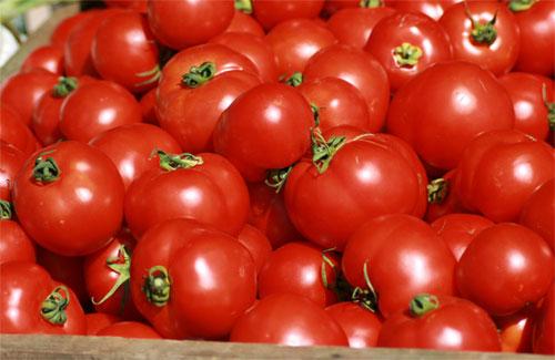 Tomates de importación