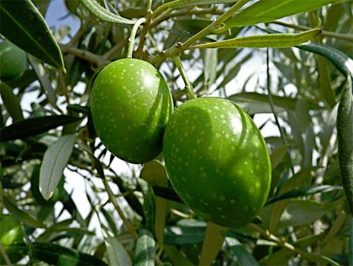 Aceite de oliva Alcampo