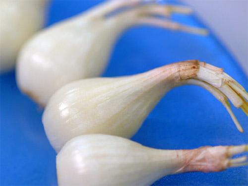Cebollín japonés