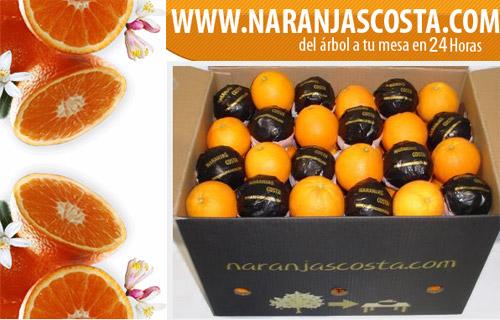 Naranjas valencianas del árbol a la mesa