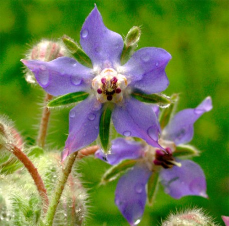 Las Flores mas hermosas del mundo