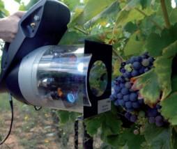 Análisis de la calidad de las uvas a pie de viña