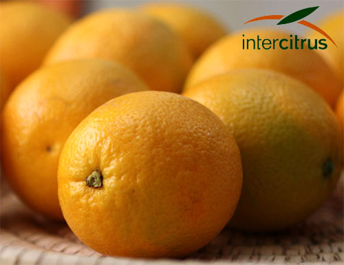 Precios naranjas y mandarinas