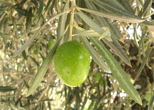Antioxidantes en desperdicios alimentarios