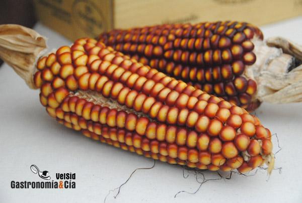 Alimentos modificados genéticamente en Brasil