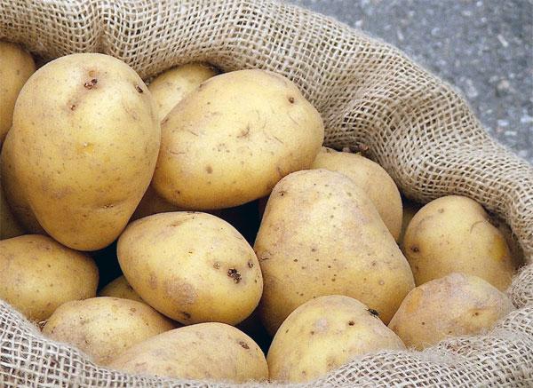 Patatas resistentes al cambio climático