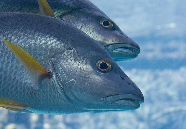 Piensos para peces de acuicultura