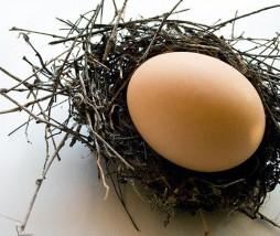 Riesgos de Salmonella en los huevos