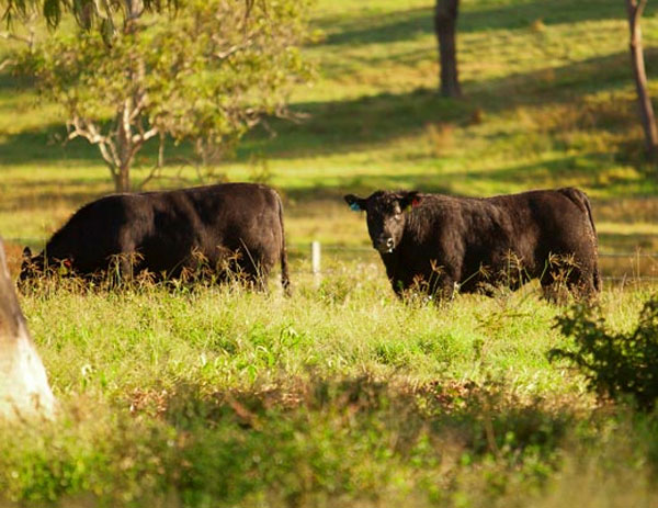 Vigilancia en los mataderos para garantizar el respeto animal