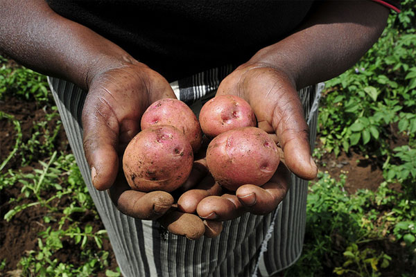 Agricultura ecológica Vs agricultura convencional