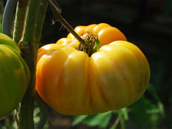 Química de los tomates