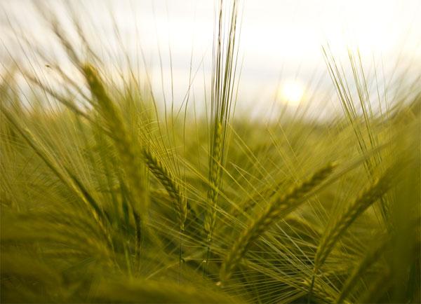 Aumento de las temperaturas y efecto en los alimentos