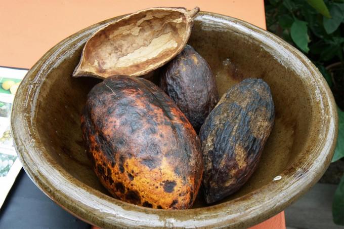 Industria del cacao