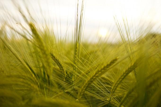 Cultivo de alimentos sostenibles