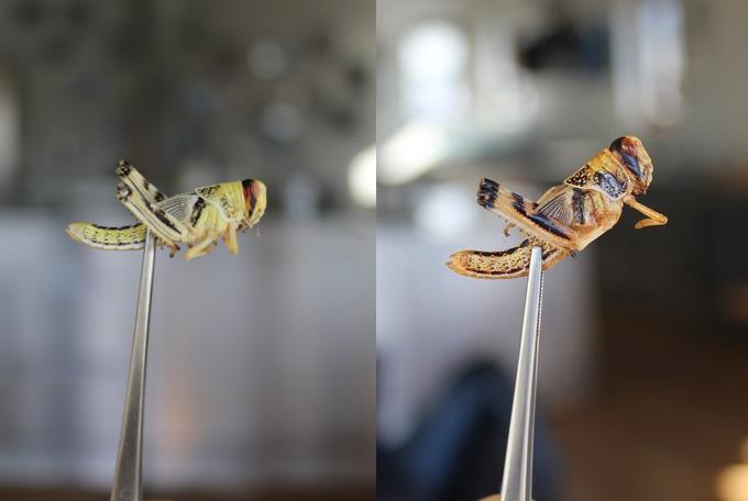 Alimentación humana con insectos