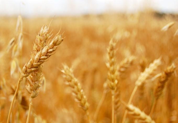 Producción de alimentos en el mundo