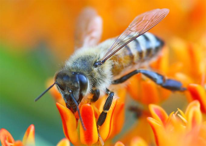 Reducción de abejas en el mundo