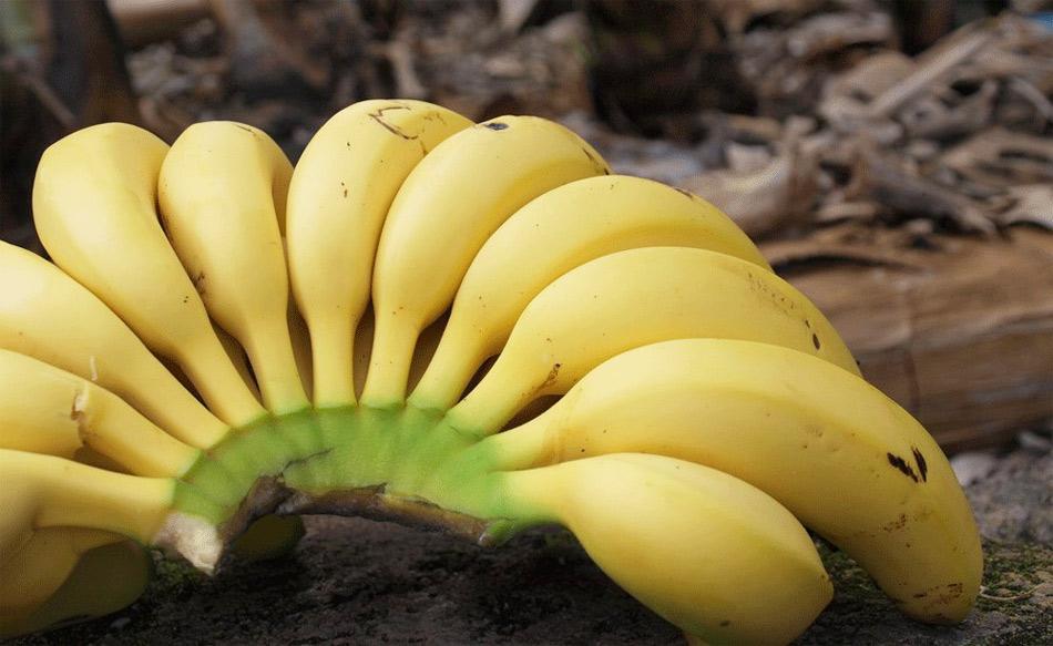 El Plátano de Canarias ya tiene la IGP