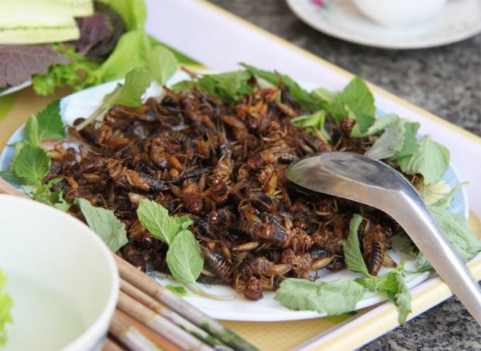 Alimentación con insectos
