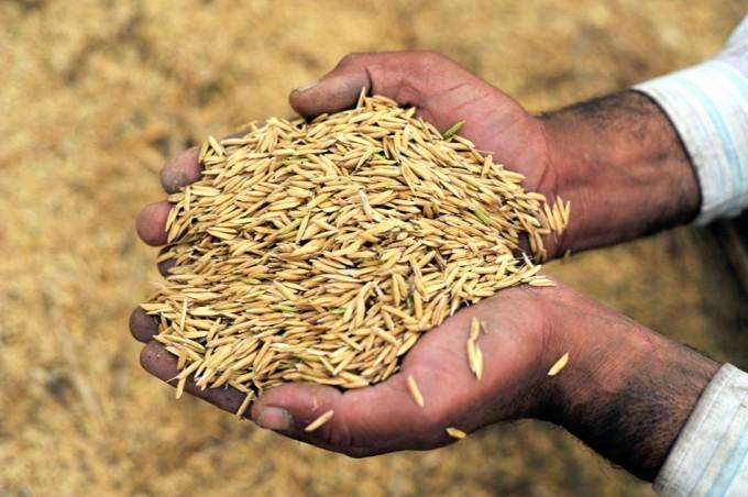 Políticas agrícolas contra el cambio climático