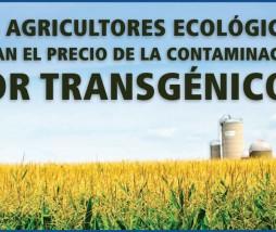 Contaminación de ecológicos por transgénicos