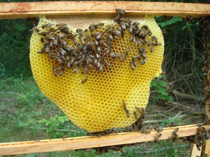 Miel china para mezclas
