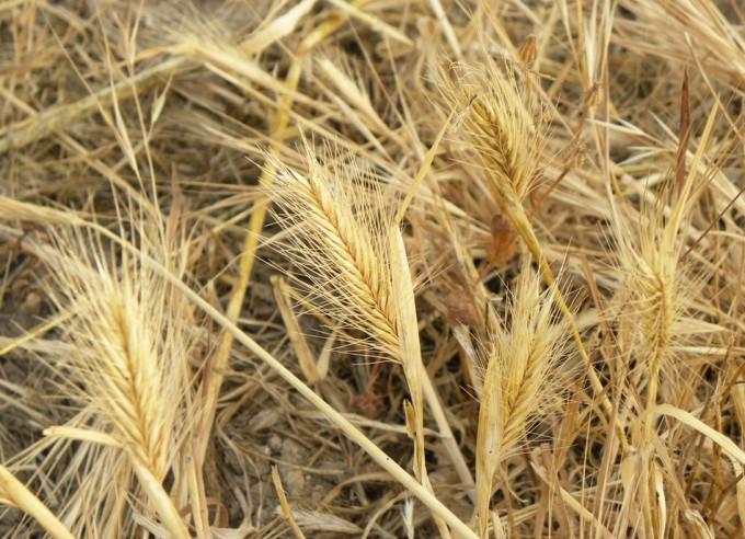 Productos fitosanitarios en los cultivos