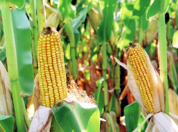 Seguridad alimentaria mundial