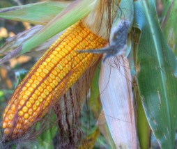Contaminación ambiental y producción de alimentos