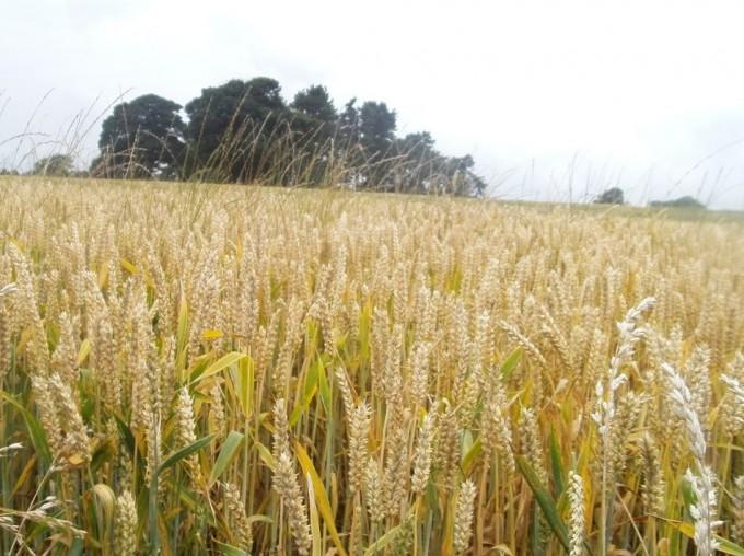Crecimiento de cultivos en sequía extrema
